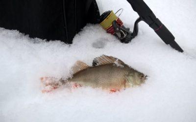 Окуни на снегу или день откушенных хвостов 🦈 Открытие 2019 рыболовного года