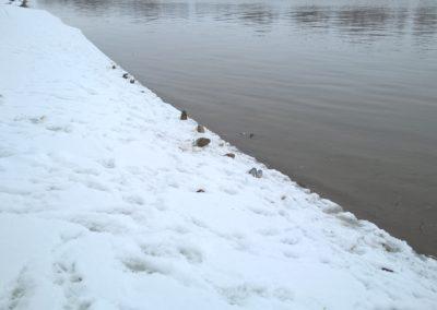 Фото воронья столовая на берегу реки Москвы под Воскресенском